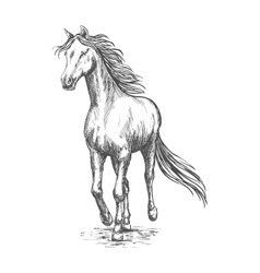 Horse gallop running pencil sketch portrait vector