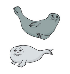 pretty seals isolated on white set of vector image