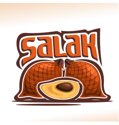 Salak fruit vector