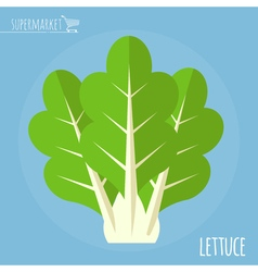 Lettuce icon vector image