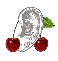 Cherries on ear in vintage engraving style vector image