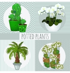 Four different green plants in pots vector image