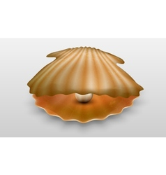 Pearl in shell vector