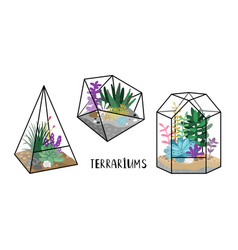 terrariums with plants vector image