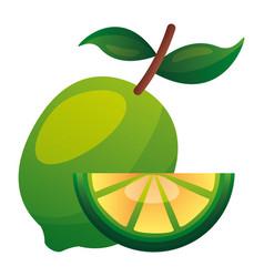 whole and slice lemon citrus vector image