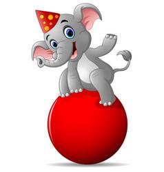 Cartoon circus elephant as acrobat vector