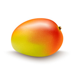 mango fruit isolated on white background vector image