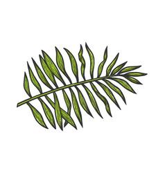 palm tree branch sketch vector image