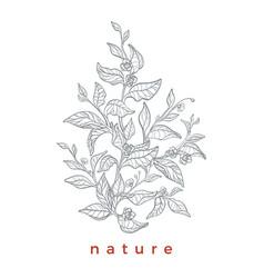 Template tea branches white vector