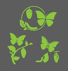 Butterfly cycle vector image vector image