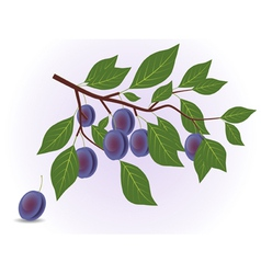 Blue plum branch vector image