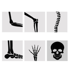 human joints knee vector image