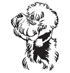 decorative portrait of dandie dinmont terrier dog vector image