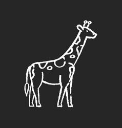 giraffe chalk white icon on black background vector image