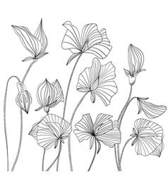 Monochrome Sweet pea flowers vector