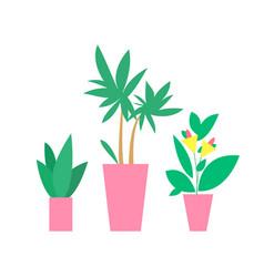 plants in pots interior decor vector image