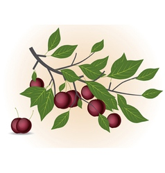 Red plum branch vector image