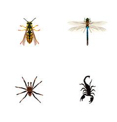 Set of bug realistic symbols with sting tarantula vector
