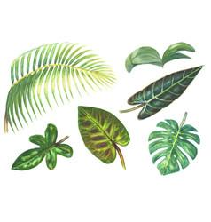 set tropical exotic plants vector image
