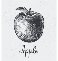 hand drawn apple engraving style hand vector image vector image