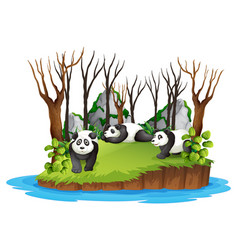 panda in wild forest vector image