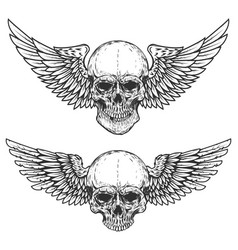 Set of winged skulls isolated on white background vector