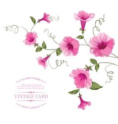 Bindweed flower on paper vector image