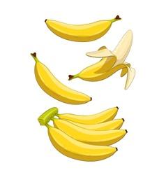 Banana Tropical fruit vector image vector image