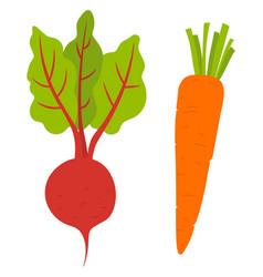 Beet root and carrot vegetables veggies vector