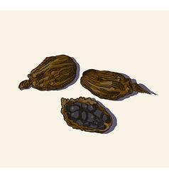 Black currant sketch vector image