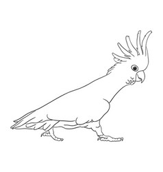 Cockatoo bird line art 03 vector