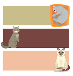 different cat banners cards cute kitty pet cartoon vector image