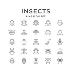 Set line icons insects vector