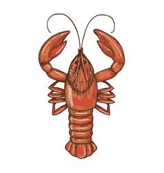 sketch of crayfish vector image vector image