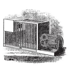 Rat cage vintage engraving vector image vector image