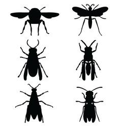wasps vector image
