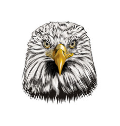 bald eagle head portrait from a splash of vector image