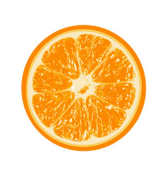 Fresh orange isolated on white background vector