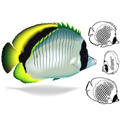 Lined Butterflyfish Set vector image