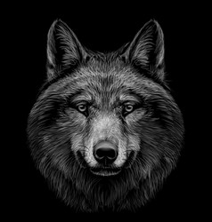 portrait a wolfs head on a black background vector image
