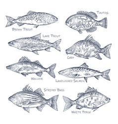side view on ocean and sea river fish sketch vector image