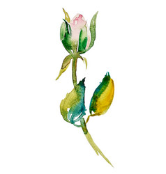 Watercolor rose bud with leaves vector
