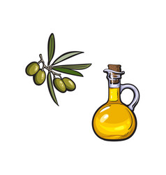 sketch olive oil logo icon isolated vector image vector image