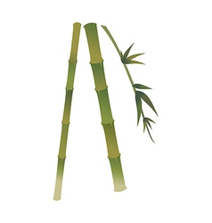 A view of bamboo vector