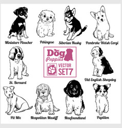 Dog puppies - set funny dogs puppy pet vector