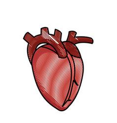 drawing heart human organ healthy vector image