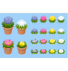 isometric set flowers or plants in pots vector image