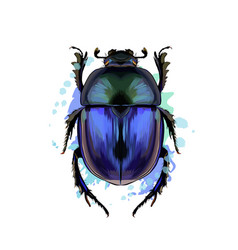 scarab beetle from a splash watercolor colored vector image