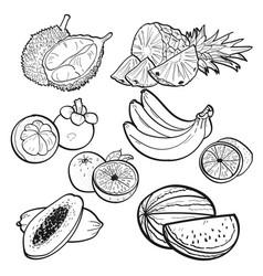 Set doodle of tropical fruit vector