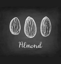 Chalk sketch of almond vector
